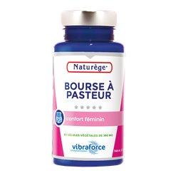 Bourse Pasteur