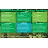 Huile essentielle Ravintsara 10 ml PhytoSun Aroms
