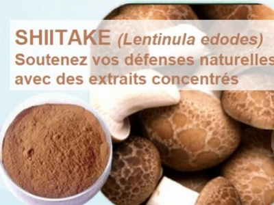 shiitaké immunité vitalité